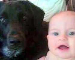 The Babysitter Was Abusing Their Baby Boy. Now Watch What The Family Dog Does