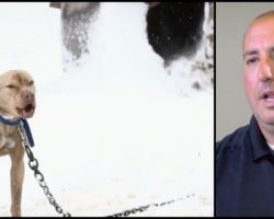 Pitbull chained in snow cries for help – now watch when the policeman comes to his rescue