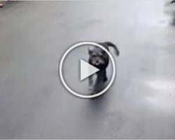 Dog Lost for 6 Days, CRIES when Found
