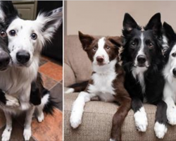 Adorable dogs love to cuddle with each other. Then owner introduces them to a new brother