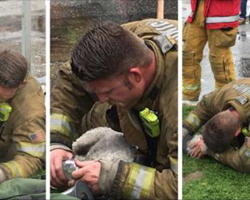 Firefighters carry lifeless puppy out of burning building. Then they bring her back to life