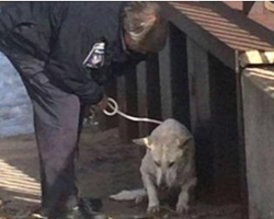 Officer Saves Freezing Dog Struggling To Survive, But That's Not Even The Best Part Of The Rescue