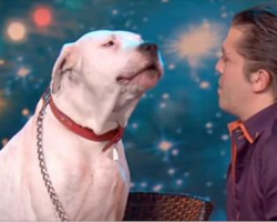 Judges were confused that dog took the stage, but watch him show off his golden pipes
