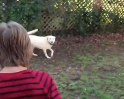 Boy And Neighbor's Dog Share Emotional Reunion After Year Apart