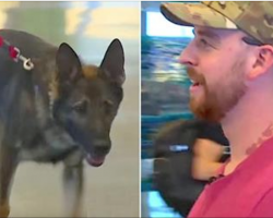 Nervous Soldier Worries Military Dog Won't Remember Him When They Make Eye Contact After 3 Years