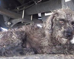 Rescuer finds what a dog is hiding after he reaches his hand out to help