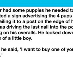 A boy picks out a crippled pup to buy from the farmer for the most heartwarming reason