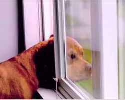 This dog waits patiently for his owner to come home every day. Every dog lover must watch this footage