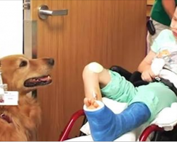 'Lifeless' child is introduced to therapy dog. Then boy miraculously begins to show life