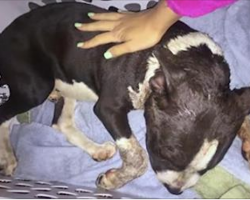 Severely beaten puppy collapses on her porch, makes miraculous recovery with love and care