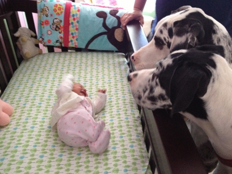 01-dogs-with-babies