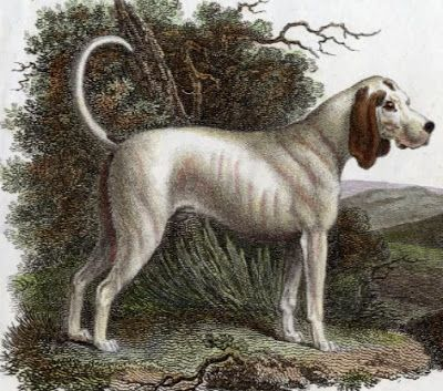 01-extinct-dog-breeds