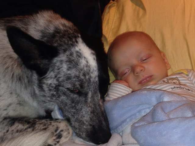 02-dogs-with-babies