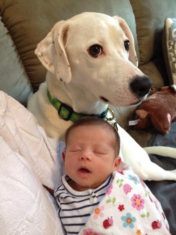 04-dogs-with-babies