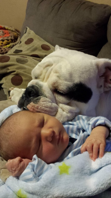 10-dogs-with-babies