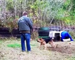 Dog's been chained his whole life, but learns to love again after stranger frees him