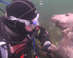 Diver doesn't understand what seal wants – until it grabs his hand