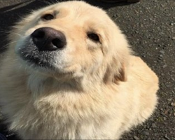 Dog That Lost Her Babies to Barn Fire Fosters 8 Orphaned Puppies After Their Mom Died