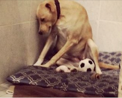 Dog Returned To Rescue So Depressed She Refuses To Leave Kennel