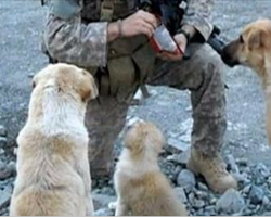 Soldier met 3 dogs while out on active duty. His ultimate fate with them will give you chills