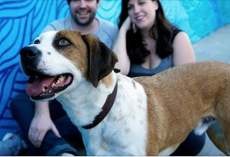 Dog Stuck In Shelter For Over A Year Gets Adopted To Play The Star Role In A New TV Series