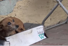 Dog sat in shoebox for months waiting to be rescued, and then they finally came