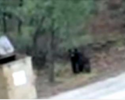 Helpless momma bear can't get her cubs out of a dumpster – Watch who comes to help