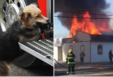 Firefighters put out house fire – then see the dog carrying something in its mouth