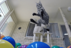 Kitten Discovers New Ball-Pit, You Don't Want To Miss The Reaction