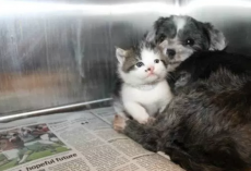 Homeless Dog Nurses An Abandoned Kitten. This Will Definitely Melt Your Heart
