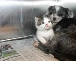 Homeless Dog Nurses An Abandoned Kitten. This Will Definitely Melt Your Heart