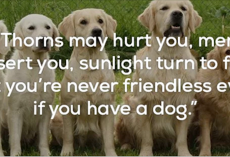 25 quotes to remind you that dogs are the greatest