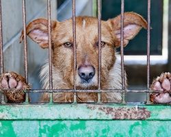 BREAKING NEWS: Dog Slaughter & Butchering Is Banned In South Korea's Largest Dog Meat Market