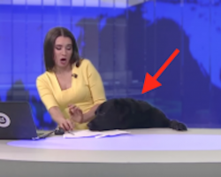 This Dog Interrupting LIVE News Will Make Your Week