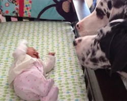 Parents Introduce The New Baby To Their Dogs… And Things Don't Go As Planned