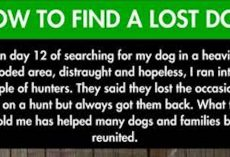 This guy thought he'd never see his dog again. Then he followed this tip and found his best friend.