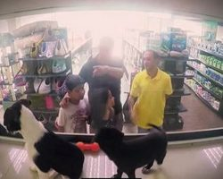 Pet Store Secretly Replaces All The Animals With Rescues And Shoppers Fall In Love