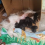 Stray crawls under random porch and gives birth to 9 puppies