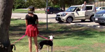 Woman watches a war veteran get out of his car, reunites him with his two lost dogs
