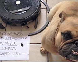 18 Hilariously Naughty Dogs Who Have No Shame