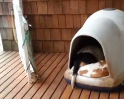 Owner goes and checks up on dog house, gets a huge surprise from her dogs