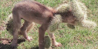 Woman Discovers Yelping Creature Outside Home, Then Looks Closer & Immediately Calls For Help
