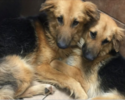 Sick Shelter Dogs Refuse To Be Separated, Then Staff Takes 1 Pic That Changes Their World Forever