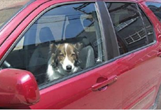 Nevada Makes It Against The Law To Leave Dogs In Hot Cars