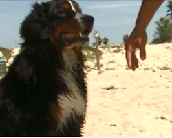 Newly-Adopted Shelter Dog Saves Swimmers From Dangerous Riptide