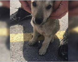 Police Rescue Puppy Locked In Car In 100-Degree Weather And Arrest Owner