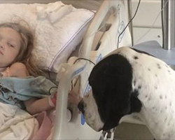 Great Dane Walks Up To Her Hospital Bed, Now Keep Your Eyes On The Dog's Back