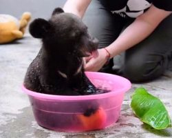 Too cute to be true 4-month-old cub gets a bath, but don't miss when he grabs the apple