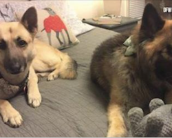 "Blind Pup And Her ""Seeing-Eye Dog"" Are In Search Of A Forever Home Together"