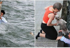 Man At Pier To Scatter His Grandmother's Ashes In The Bay Wound Up Saving A Drowning Dog's Life